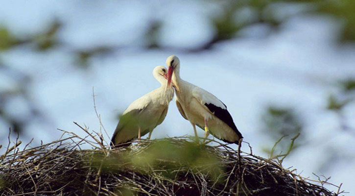 devoted male stork klepetan Search Results Web results
