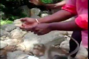 'বিবাহবার্ষিকীর' চকোলেট কেক ছিনতাই করে পালাচ্ছে বাঁদর ! ভাইরাল ভিডিও