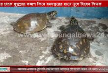 বাজার থেকে লুপ্তপ্রায় কচ্ছপ কিনে বনদপ্তরের হাতে তুলে দিলেন শিক্ষক - West Bengal News 24