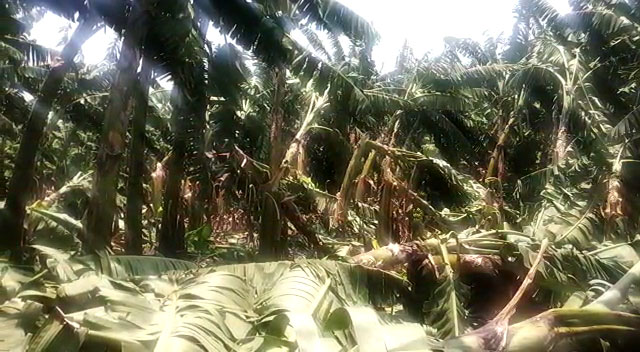 গত কালকের ঝড়ে বেশকিছু বাড়ি সহ চাষের জমিতে ব্যাপক ক্ষয়ক্ষতি - West Bengal News 24