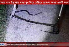 স্বজাতীয় ভক্ষণ! কালাচ সাপ উদ্ধারের সময় মুখ দিয়ে বেরিয়ে আসলো অপর একটি কালাচ! - West Bengal News 24